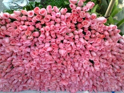 hoa valentine 10