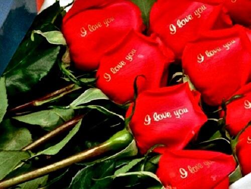 hoa valentine 3
