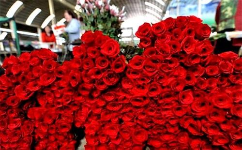 hoa valentine 8
