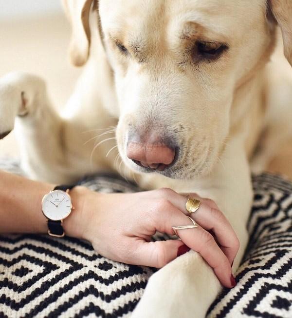 Đồng hồ nữ Daniel Wellington DW00100253 dây vải trẻ trung - Ảnh 1