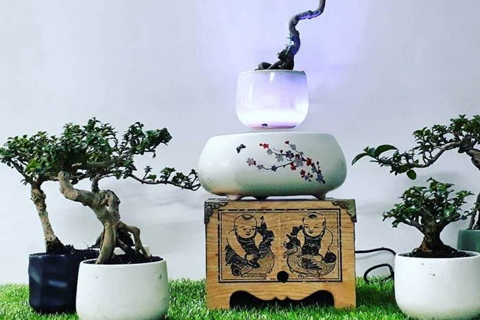 60 món quà tặng bố thiết thực theo từng sở thích - cây cảnh