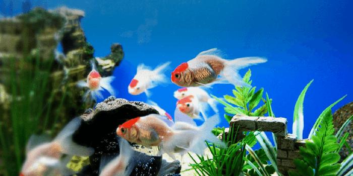 60 món quà tặng bố thiết thực theo từng sở thích - hồ cá
