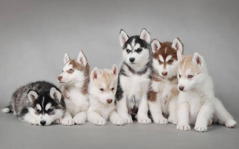 60 Món Quà Tặng Sinh Nhật Cho Bạn Trai Theo Từng Độ Tuổi - Tuổi từ 24-30 - Ảnh: Husky