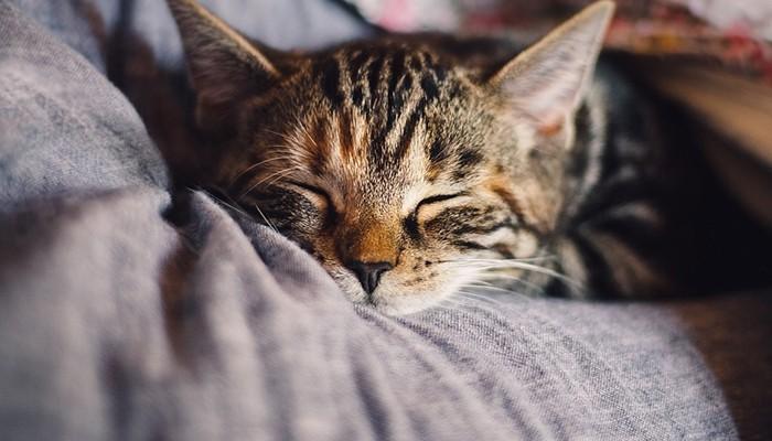Những chú mèo con thường sẽ mang lại nhiều niềm vui dành cho vợ