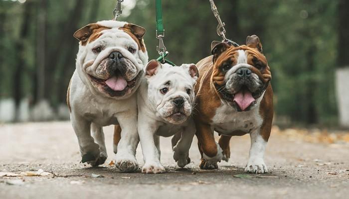Hầu hết đàn ông đều thích nuôi chó, vì thể đây là món quà nên dành cho chồng