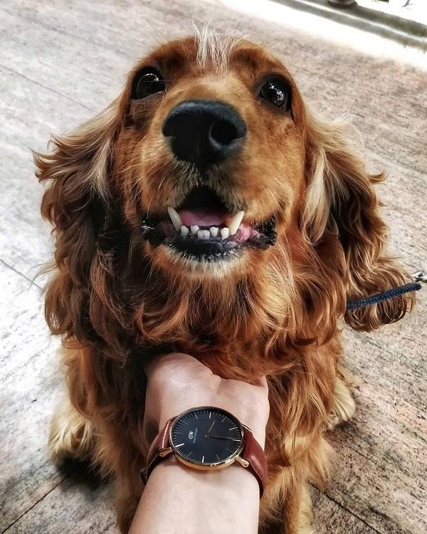 Đồng hồ nam Daniel Wellington DW00100125 thời trang, tinh tế - Ảnh 4
