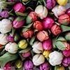 40 Món quà tặng tri ân thầy cô, cực kỳ ý nghĩa ngày 20-11 - tặng hoa