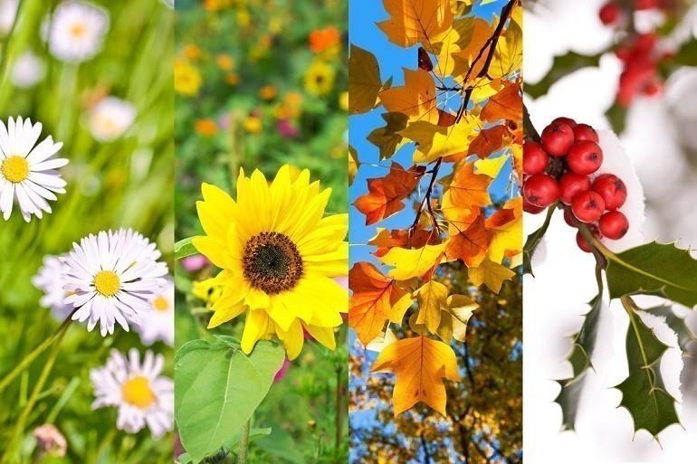 Lập xuân là thời điểm trăm hoa đua nhau khoe sắc - Ảnh 3