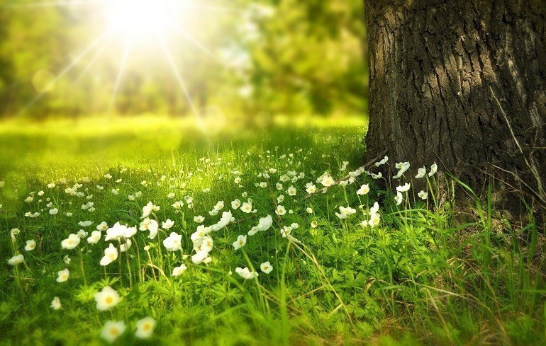 Trong ngày lập xuân, cây cối đâm chồi nảy lộc và phát triển - Ảnh 5