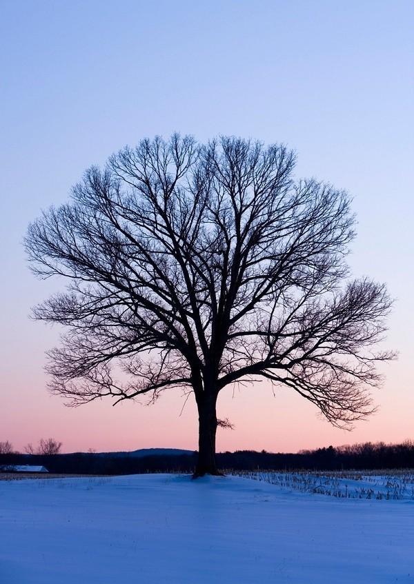 Lập xuân là chuyển giao giữa mùa lạnh với mùa nóng - Ảnh 6