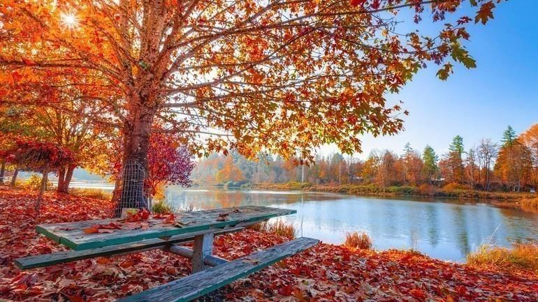 Lập thu là thời điểm bắt đầu cho mùa thu của một năm - Ảnh 8