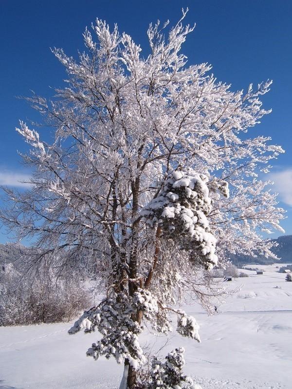 Lập đông là báo hiệu cho một mùa đông dài sắp đến - Ảnh 9